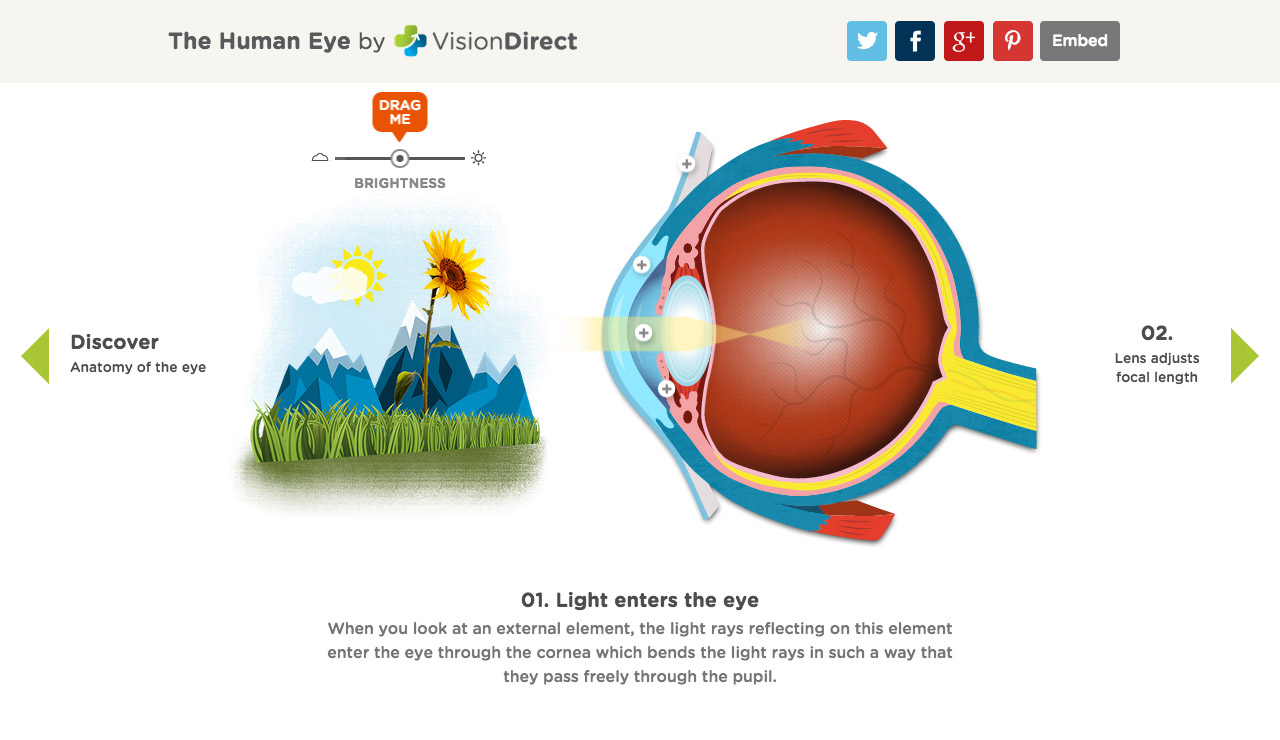 An interactive guide to the human eye one page website award an interactive guide to the human eye big screenshot ccuart